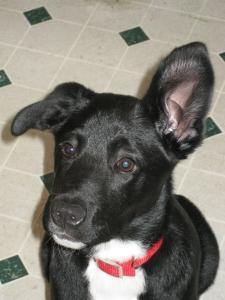 Remus' Ears
