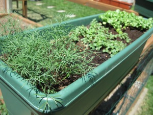 Dill, Oregano, and Basil